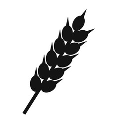 dried wheat ear icon simple style vector image