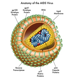 Aids vector image