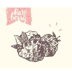 Hand drawn raspberry sketch vector image