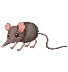 Little rat with gray fur vector image vector image