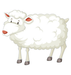 a white sheep character vector image