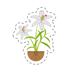 crocus flower petal leaf grow vector image