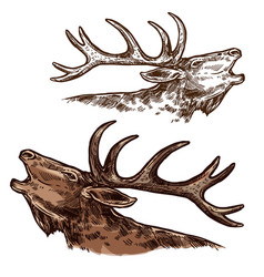 Elk moose head muzzle isolated sketch vector