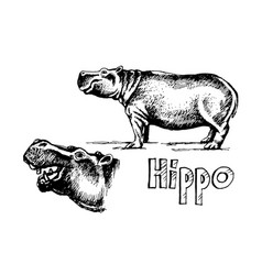 hippo set sketch vector image