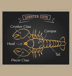 Lobster cuts vector