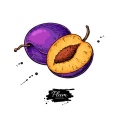 Plum drawing hand drawn fruit and sliced vector