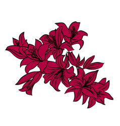 red lily on white background vector image