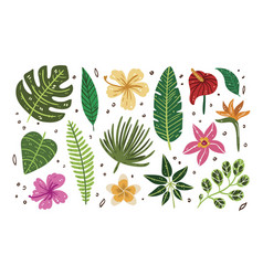 summer set tropical leaves vector image
