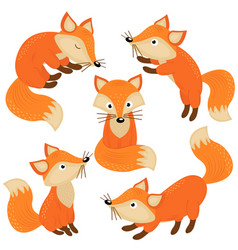 set of isolated cute foxes part 1 vector image vector image