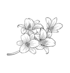 Black and white bouquet lily isolated on vector