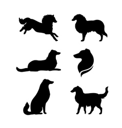 Breed of a dog collie silhouettes vector image