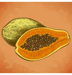 Engraving papaya retro vector