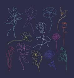 Flower hand drawn set colorful single line art vector