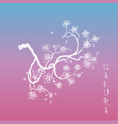 sakura japanese cherry branch with flowers vector image