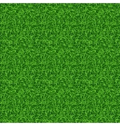 Seamless green grass pattern vector image