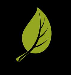 single flat green leaf herbal and botany art vector image