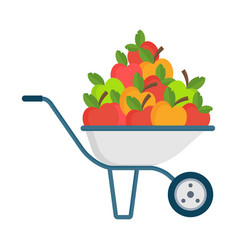 apple picking apple in garden wheelbarrow vector image