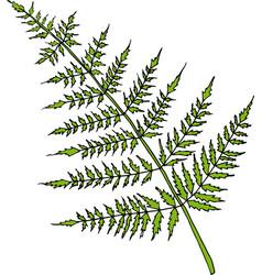fern bright cartoon vector image