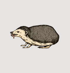 Hedgehog or spiny forest animal with a worm vector