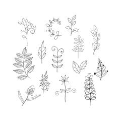 Leaves doodle set vector image