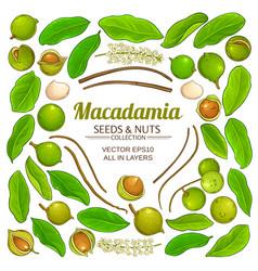 Macadamia plant elements isolated vector