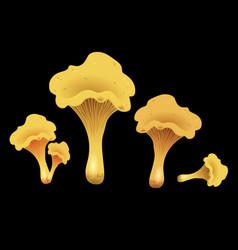 mushroom chanterelles isolated oisolated on black vector image