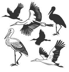 Set of storks in different poses vector