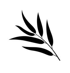 willow leaf vector image
