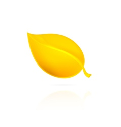 Yellow leaf on white background vector image