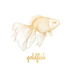 Goldfish drawing sketch vector