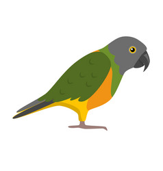 senegal parrot icon in flat style vector image