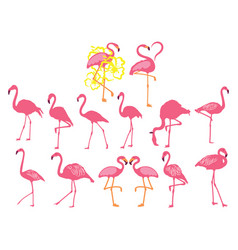 set pink flamingos collection cartoon vector image