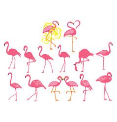 set pink flamingos collection cartoon vector image