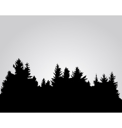 Silhouette of spruce forest vector image