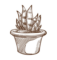 Aloe indoor plant in pot isolated sketch home vector