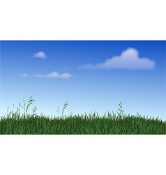 Panoramic Field of Grass vector image vector image