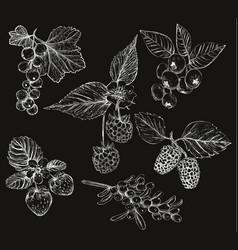 sketch of berries set of vector image vector image