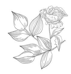 Decorative Rose flowers vector image