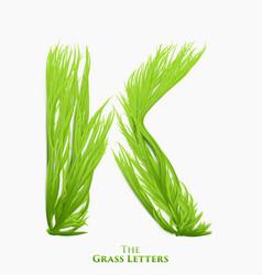 Letter k of juicy grass alphabet green k vector