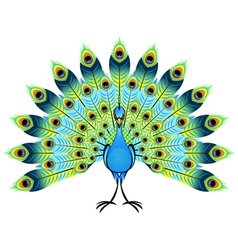 peacock vector images over 4 200 rh vectorstock com peacock vector art peacock vector file