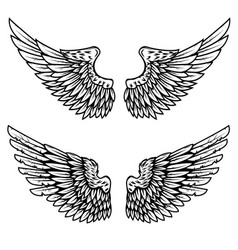 Set eagle wings isolated on white vector