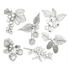 Sketch berries set vector