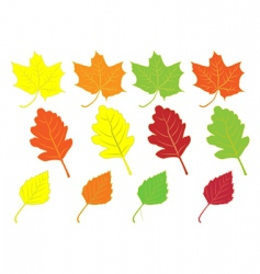collection of colorful autumn leaves vector image vector image