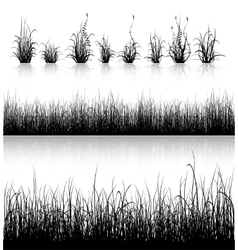 Grass silhouette isolated on white vector image vector image