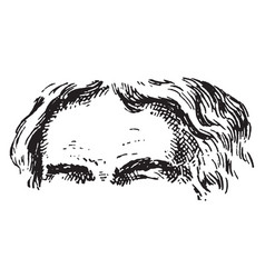 Forehead is the region vintage engraving vector