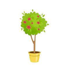 lush gardening tree in a pot with flowers vector image