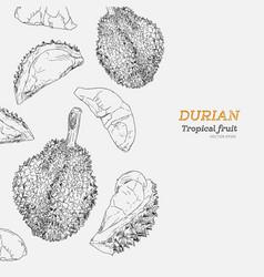 Set of durian sketch vector