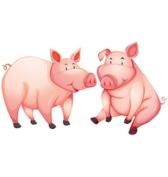 Two fat pigs with happy face vector image