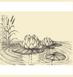 Water lily on the lake hand drawing vector