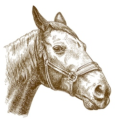 engraving horse head vector image vector image